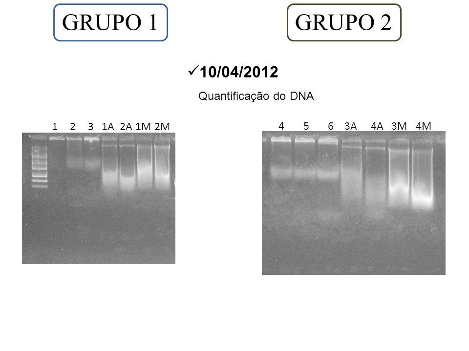 GRUPO 1 GRUPO 2 10/04/2012 Quantificação do DNA 1 2 3 1A 2A 1M 2M
