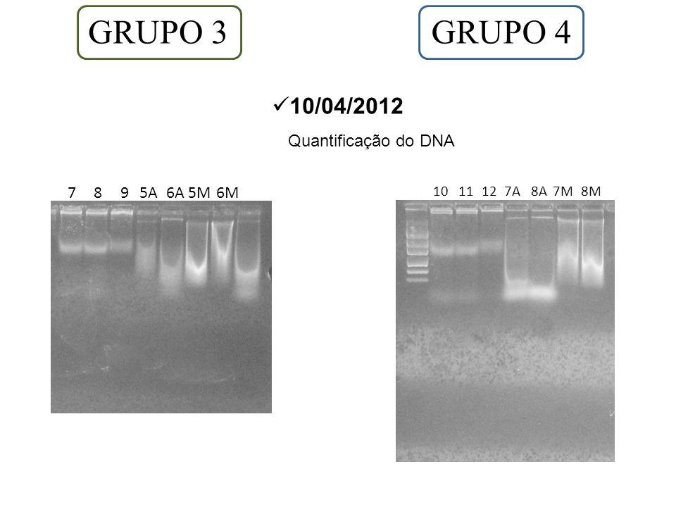 GRUPO 3 GRUPO 4 10/04/2012 Quantificação do DNA 7 8 9 5A 6A 5M 6M 10