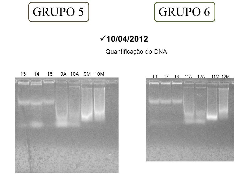 GRUPO 5 GRUPO 6 10/04/2012 Quantificação do DNA 13 14 15 9A 10A 9M 10M