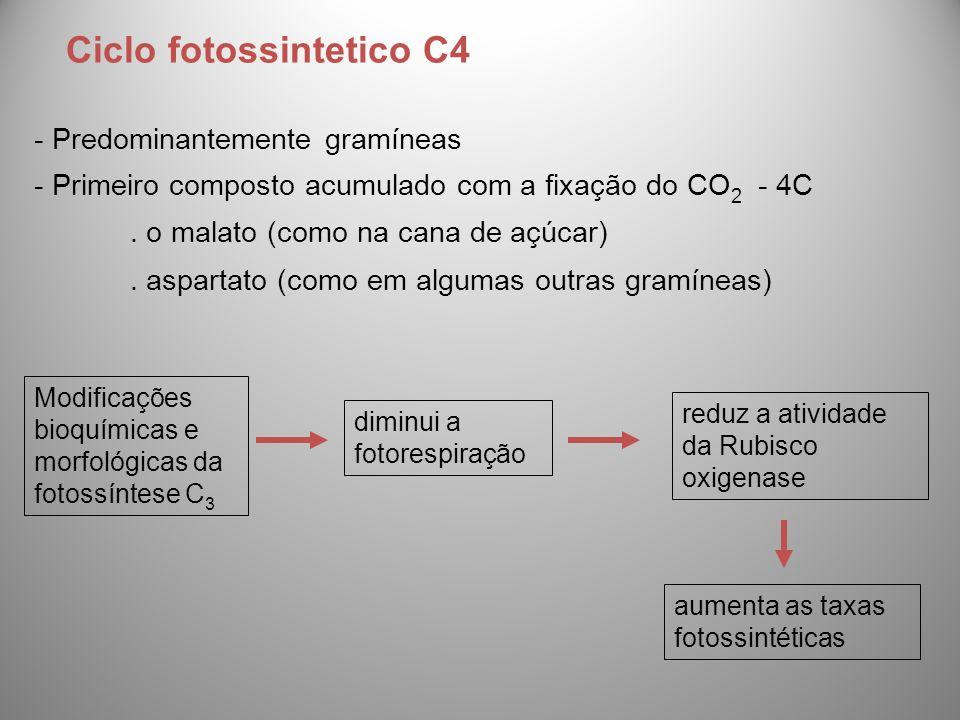 Ciclo fotossintetico C4