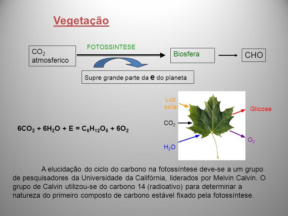 Vegetação CHO CO2 Biosfera atmosferico 6CO2 + 6H2O + E = C6H12O6 + 6O2