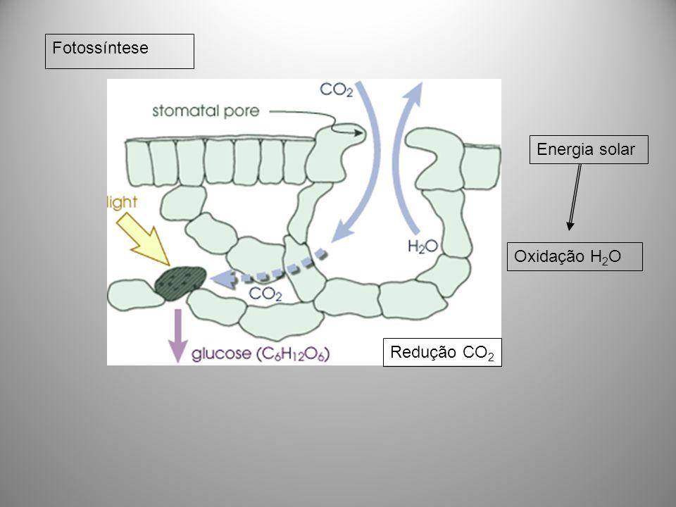 Fotossíntese Energia solar Oxidação H2O Redução CO2