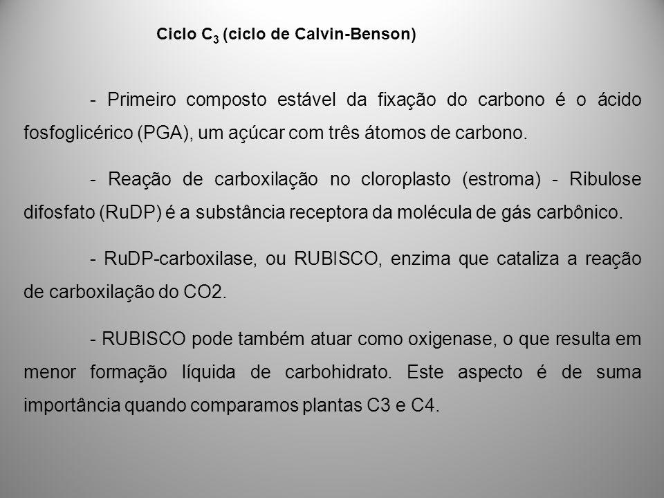 Ciclo C3 (ciclo de Calvin-Benson)