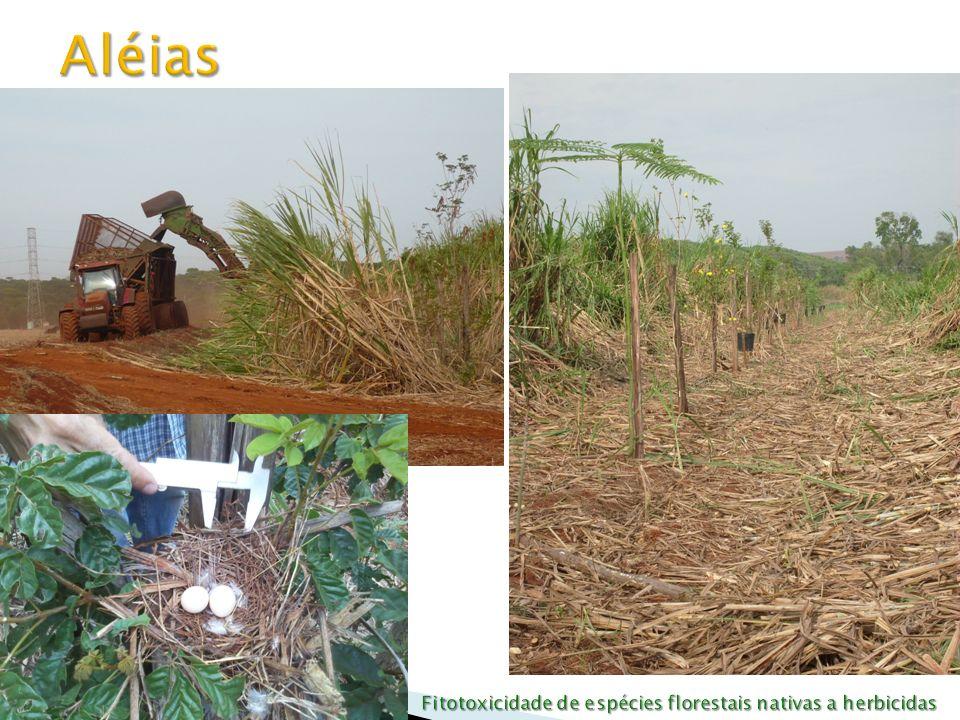 Fitotoxicidade de espécies florestais nativas a herbicidas