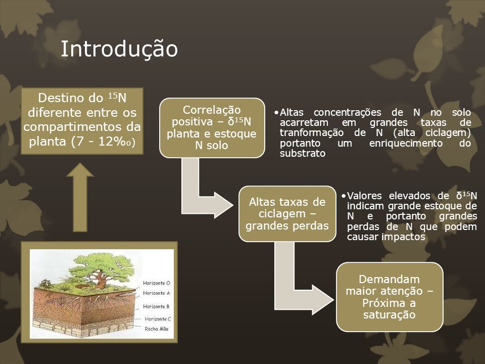 Introdução Destino do 15N diferente entre os compartimentos da planta (7 - 12%o) Correlação positiva – δ15N planta e estoque N solo.