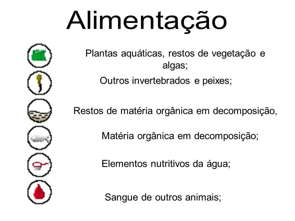 Alimentação Plantas aquáticas, restos de vegetação e algas;