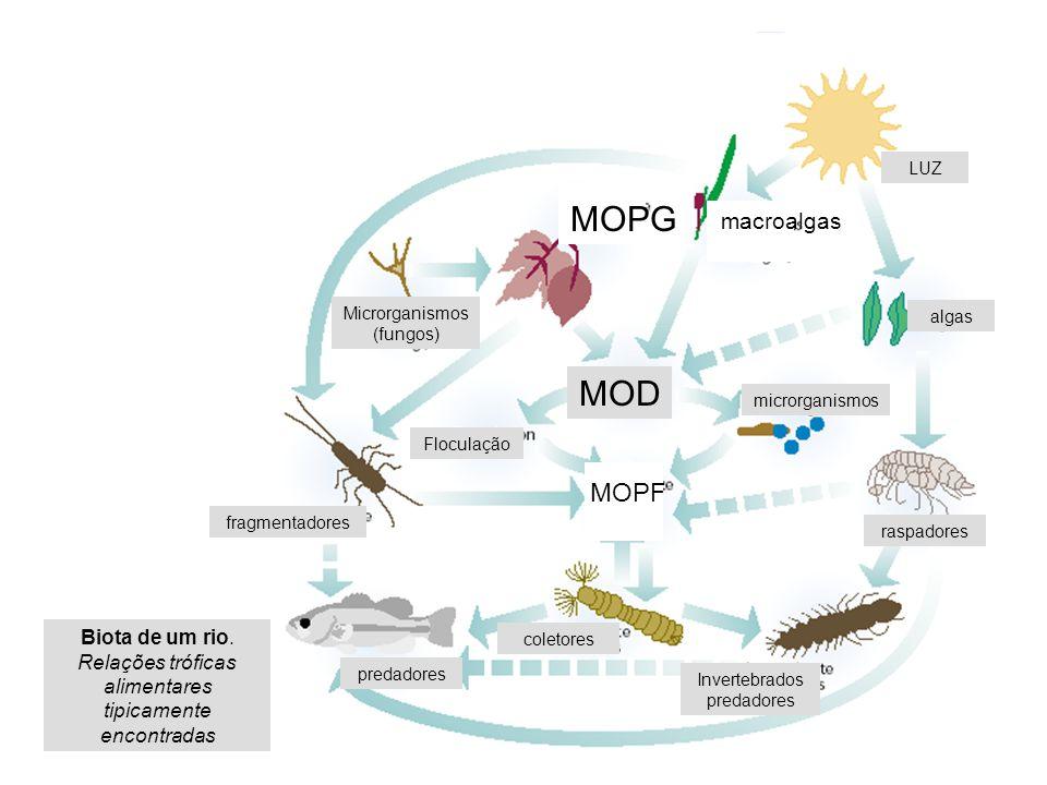 MOPG MOD MOPF macroalgas