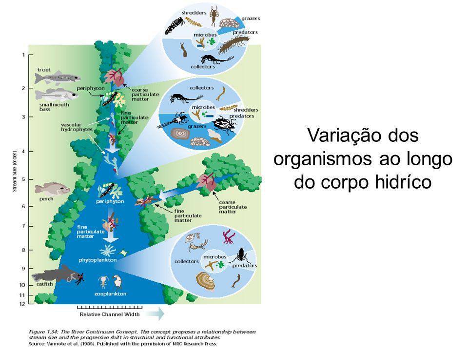 Variação dos organismos ao longo do corpo hidríco