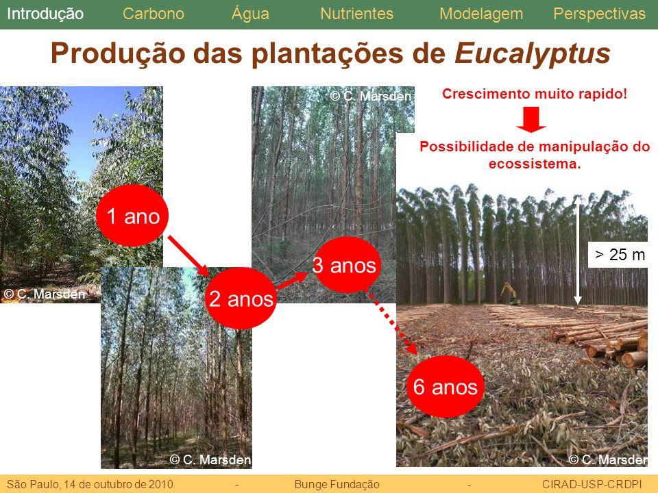 Produção das plantações de Eucalyptus
