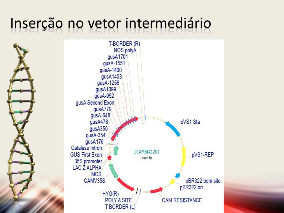 Inserção no vetor intermediário