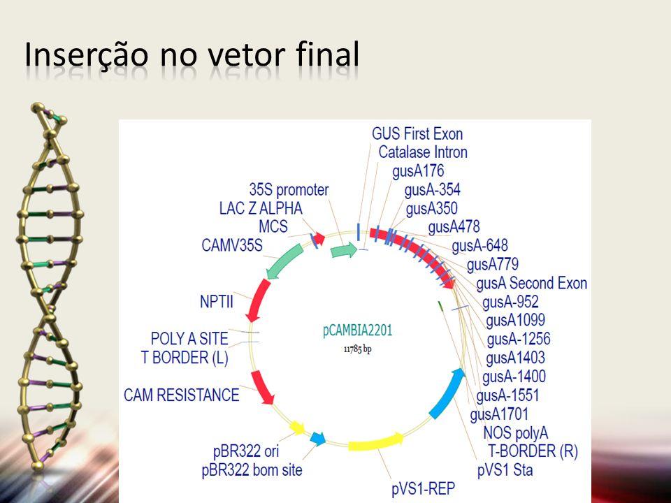 Inserção no vetor final