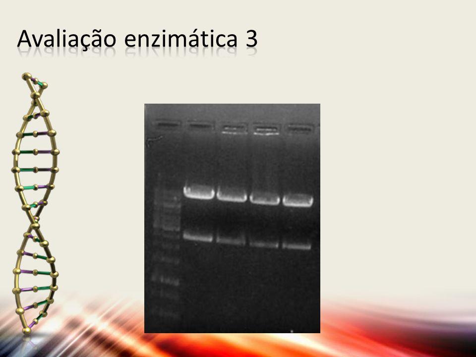 Avaliação enzimática 3