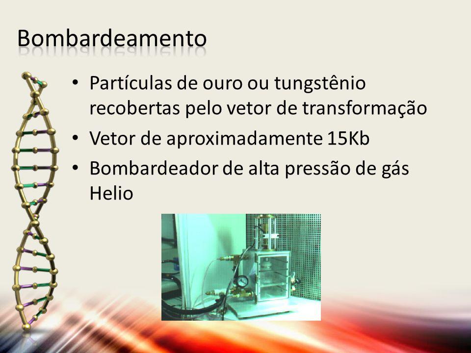 Bombardeamento Partículas de ouro ou tungstênio recobertas pelo vetor de transformação. Vetor de aproximadamente 15Kb.