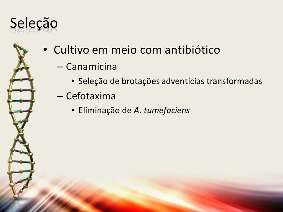 Seleção Cultivo em meio com antibiótico Canamicina Cefotaxima