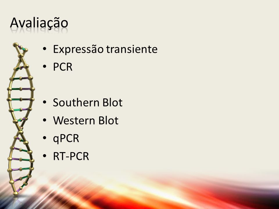 Avaliação Expressão transiente PCR Southern Blot Western Blot qPCR