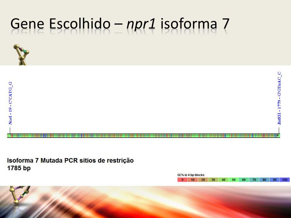 Gene Escolhido – npr1 isoforma 7