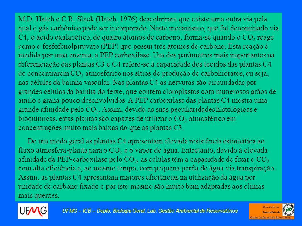 M.D. Hatch e C.R. Slack (Hatch, 1976) descobriram que existe uma outra via pela qual o gás carbônico pode ser incorporado. Neste mecanismo, que foi denominado via C4, o ácido oxalacético, de quatro átomos de carbono, forma-se quando o CO2 reage como o fosfofenolpiruvato (PEP) que possui três átomos de carbono. Esta reação é medida por uma enzima, a PEP carboxilase. Um dos parâmetros mais importantes na diferenciação das plantas C3 e C4 refere-se à capacidade dos tecidos das plantas C4 de concentrarem CO2 atmosférico nos sítios de produção de carbohidratos, ou seja, nas células da bainha vascular. Nas plantas C4 as nervuras são circundadas por grandes células da bainha do feixe, que contém cloroplastos com numerosos grãos de amilo e grana pouco desenvolvidos. A PEP carboxilase das plantas C4 mostra uma grande afinidade pelo CO2. Assim, devido as suas peculiaridades histológicas e bioquímicas, estas plantas são capazes de utilizar o CO2 atmosférico em concentrações muito mais baixas do que as plantas C3.