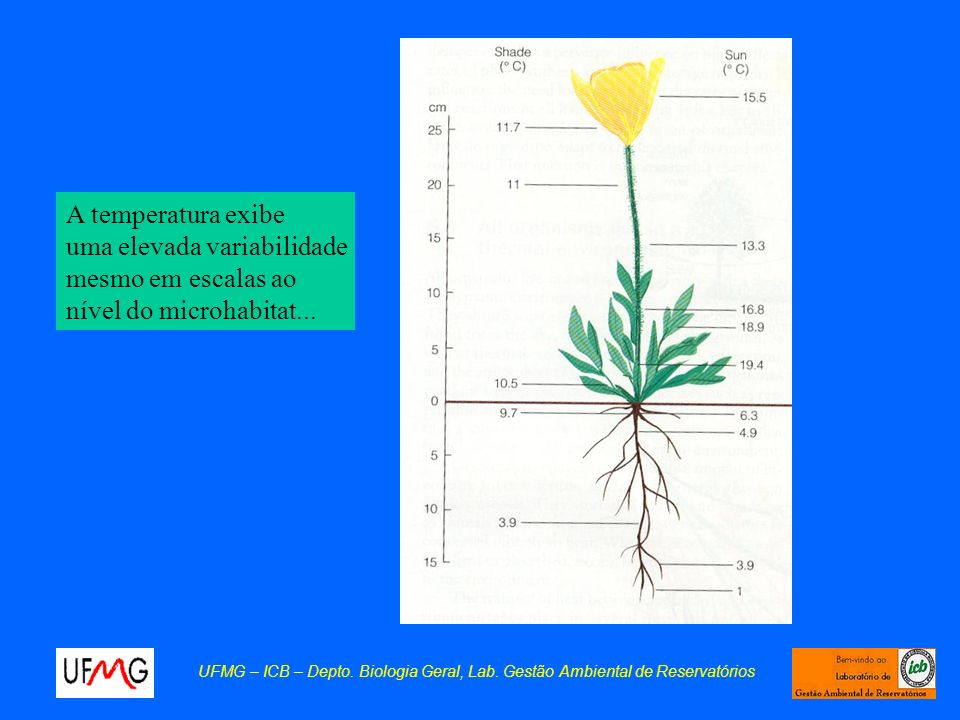 uma elevada variabilidade mesmo em escalas ao nível do microhabitat...