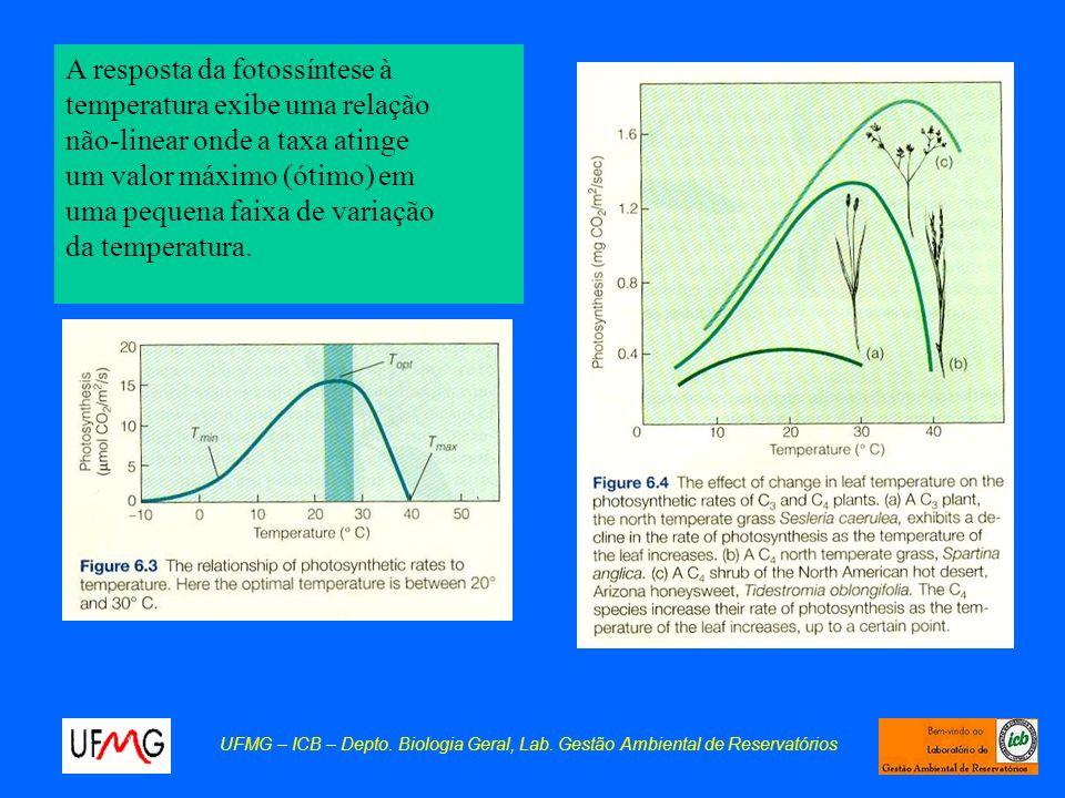 A resposta da fotossíntese à temperatura exibe uma relação