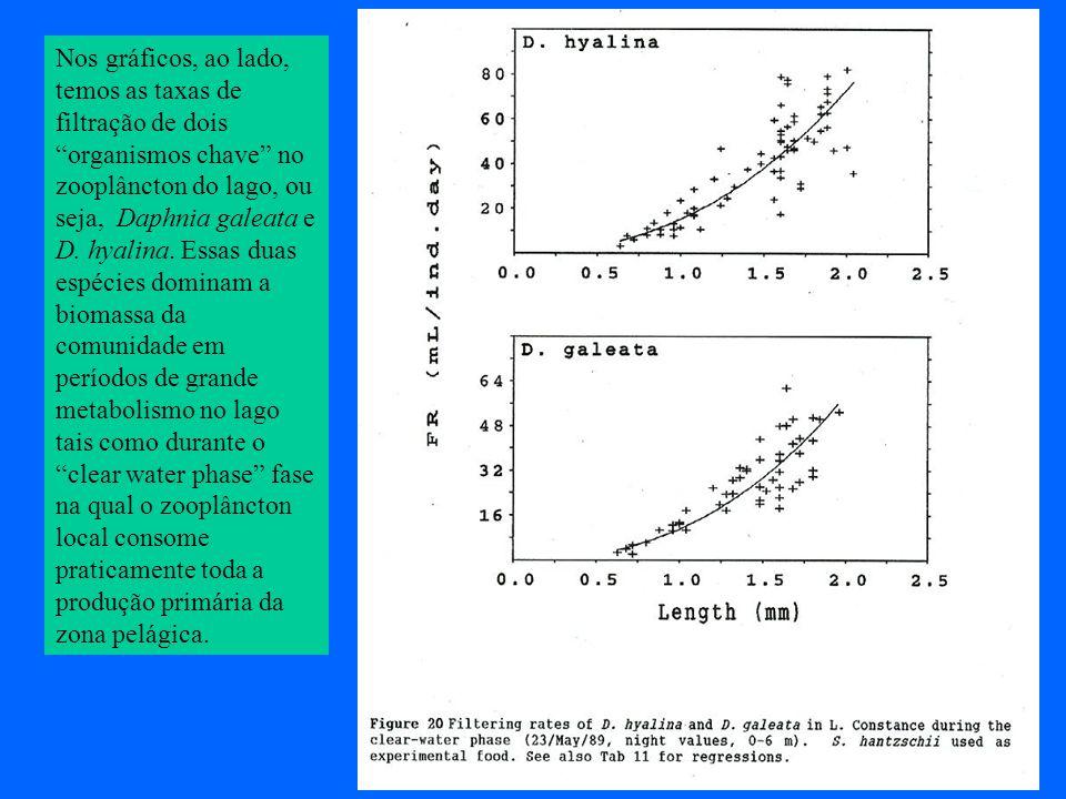 Nos gráficos, ao lado, temos as taxas de filtração de dois organismos chave no zooplâncton do lago, ou seja, Daphnia galeata e D.