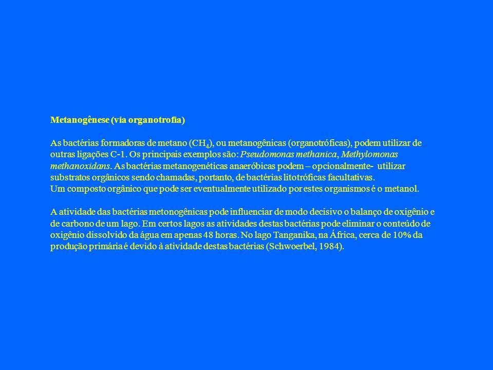 Metanogênese (via organotrofia)