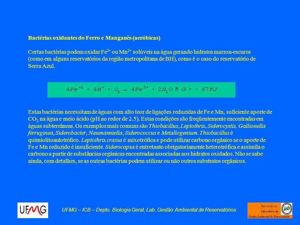 Bactérias oxidantes do Ferro e Manganês (aeróbicas)