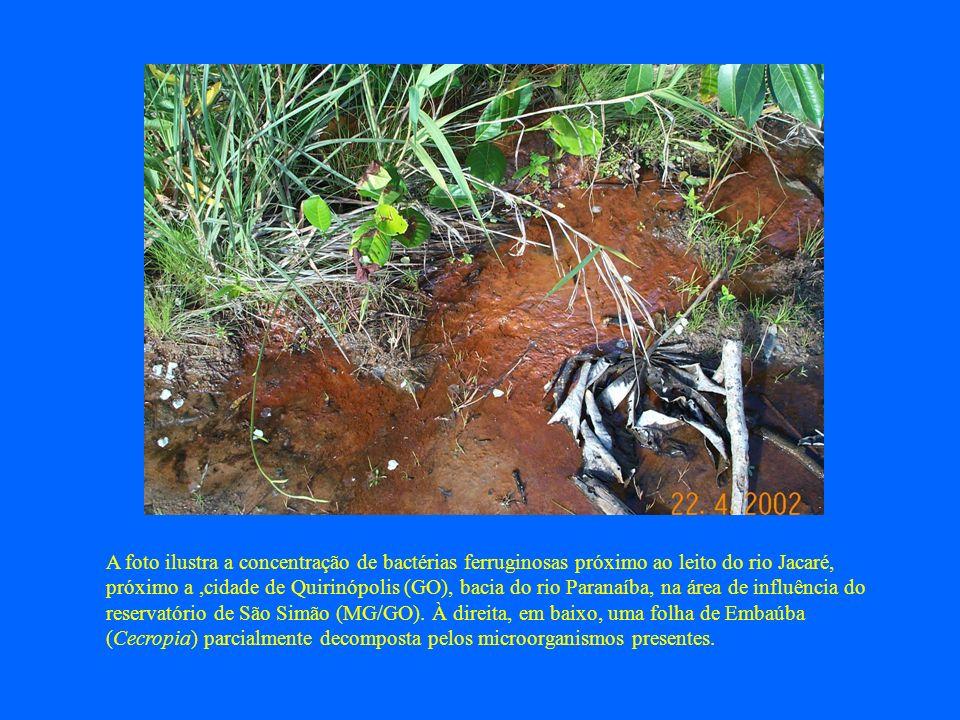 A foto ilustra a concentração de bactérias ferruginosas próximo ao leito do rio Jacaré, próximo a ,cidade de Quirinópolis (GO), bacia do rio Paranaíba, na área de influência do reservatório de São Simão (MG/GO).