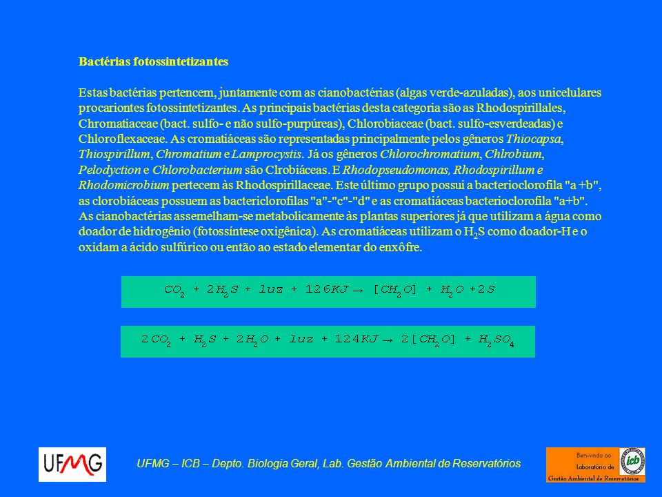 Bactérias fotossintetizantes