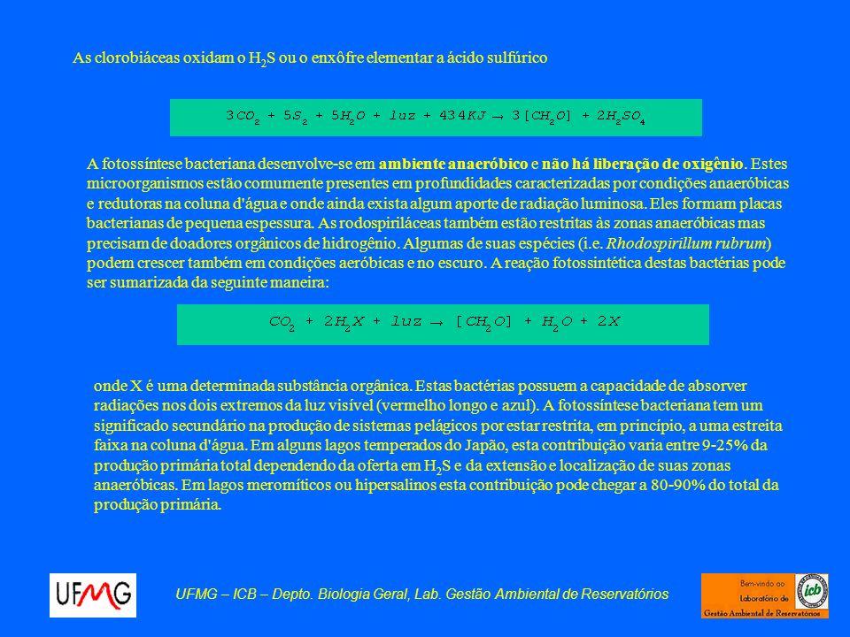 As clorobiáceas oxidam o H2S ou o enxôfre elementar a ácido sulfúrico