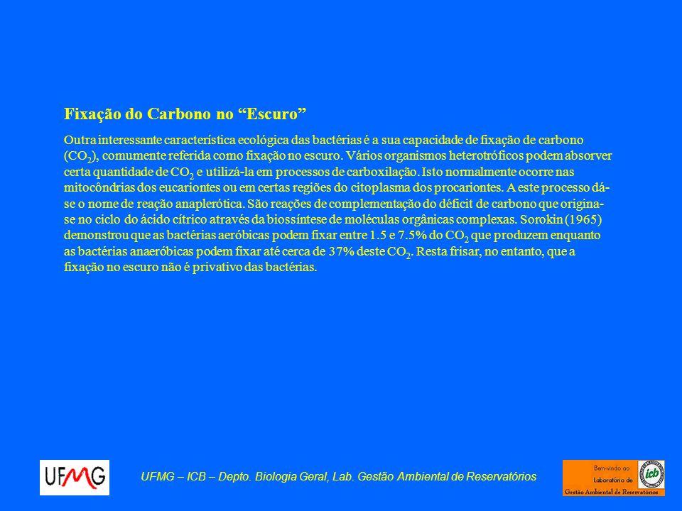 Fixação do Carbono no Escuro
