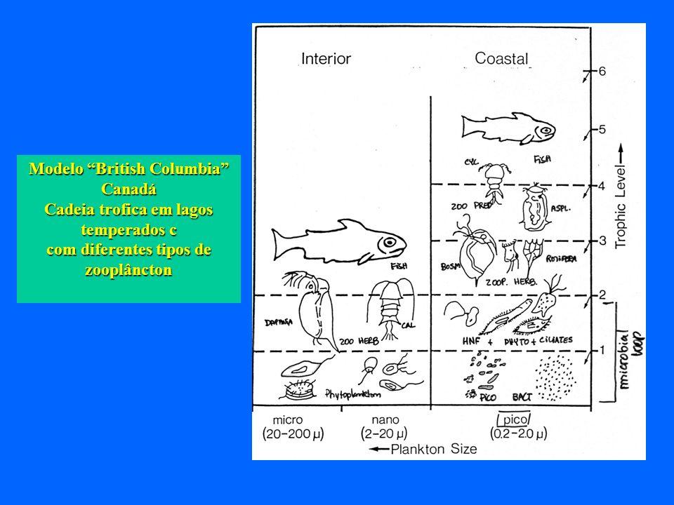 Modelo British Columbia Canadá Cadeia trofica em lagos temperados c