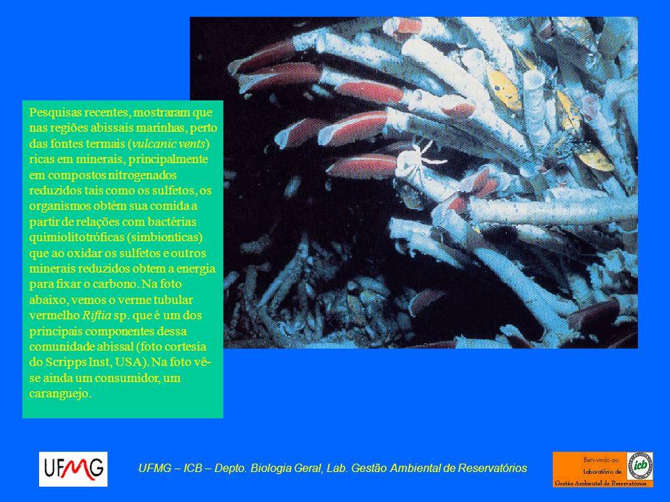 Pesquisas recentes, mostraram que nas regiões abissais marinhas, perto das fontes termais (vulcanic vents) ricas em minerais, principalmente em compostos nitrogenados reduzidos tais como os sulfetos, os organismos obtém sua comida a partir de relações com bactérias quimiolitotróficas (simbionticas) que ao oxidar os sulfetos e outros minerais reduzidos obtem a energia para fixar o carbono. Na foto abaixo, vemos o verme tubular vermelho Riftia sp. que é um dos principais componentes dessa comunidade abissal (foto cortesia do Scripps Inst, USA). Na foto vê-se ainda um consumidor, um caranguejo.