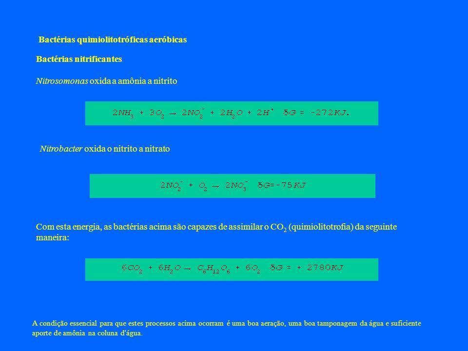 Bactérias quimiolitotróficas aeróbicas