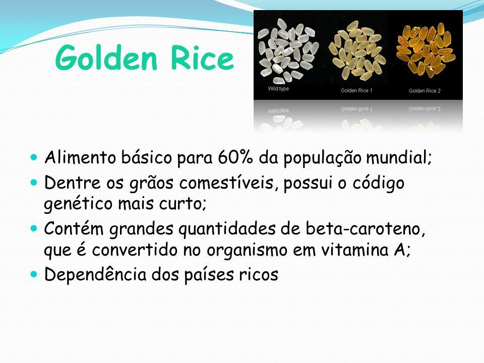 Golden Rice Alimento básico para 60% da população mundial;