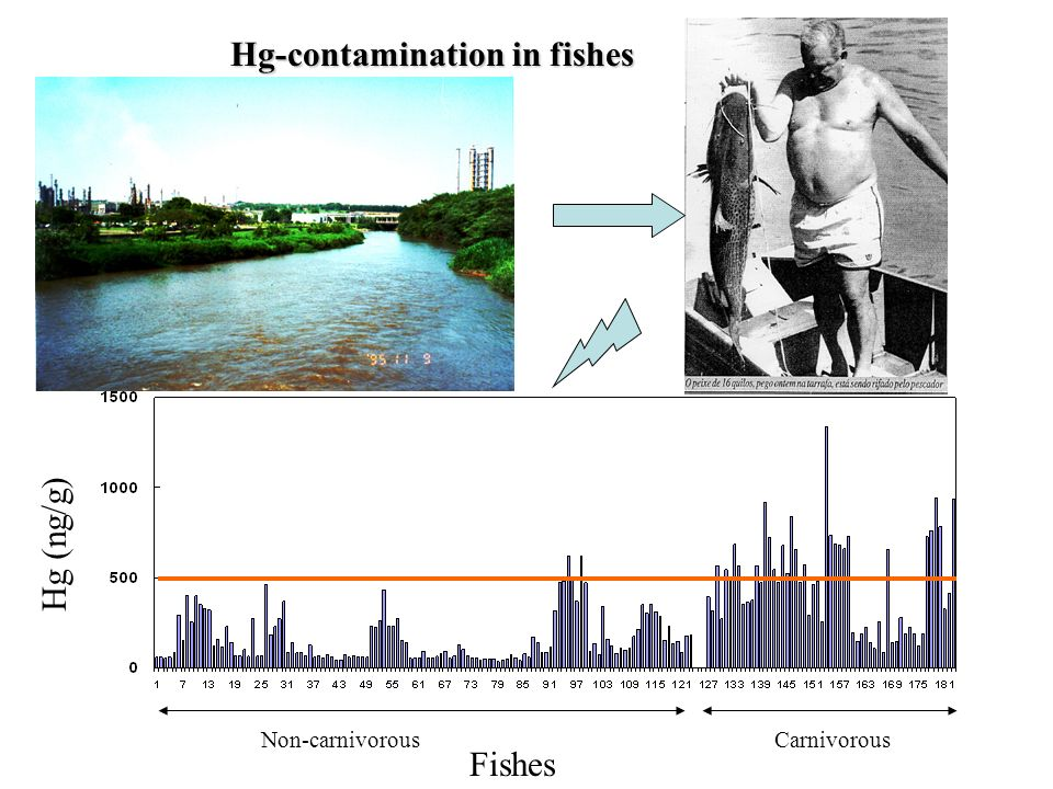 Hg-contamination in fishes