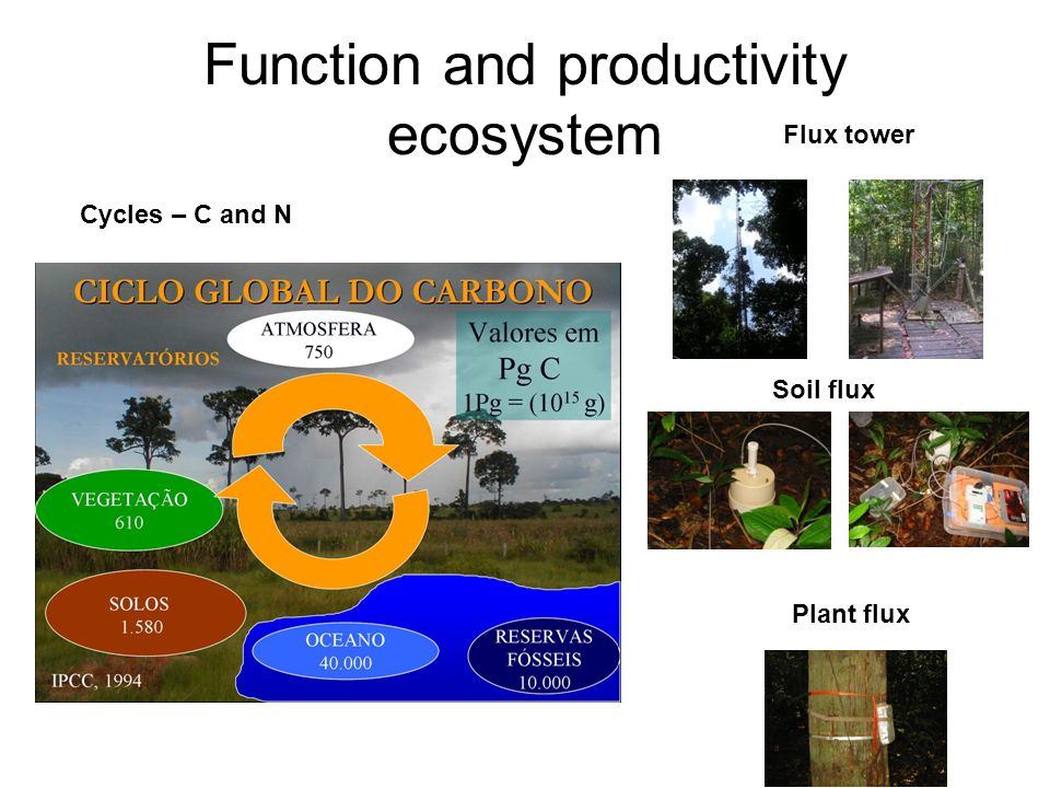 Function and productivity ecosystem