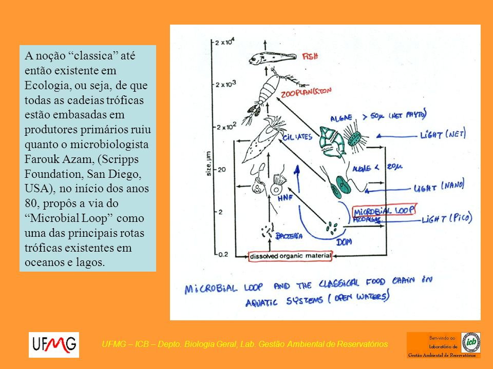 A noção classica até então existente em Ecologia, ou seja, de que todas as cadeias tróficas estão embasadas em produtores primários ruiu quanto o microbiologista Farouk Azam, (Scripps Foundation, San Diego, USA), no início dos anos 80, propôs a via do Microbial Loop como uma das principais rotas tróficas existentes em oceanos e lagos.