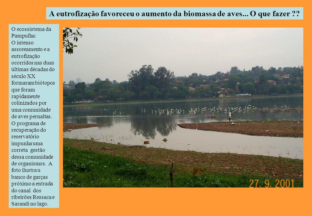 A eutrofização favoreceu o aumento da biomassa de aves... O que fazer
