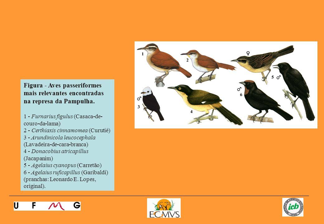 Figura - Aves passeriformes mais relevantes encontradas na represa da Pampulha.