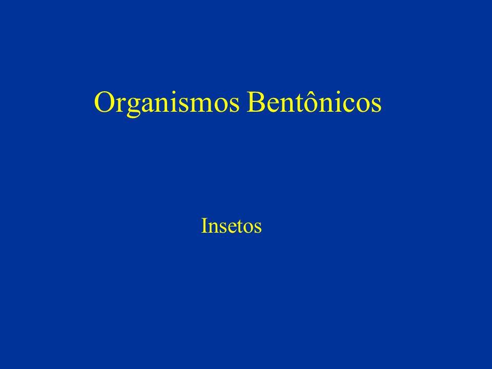 Organismos Bentônicos