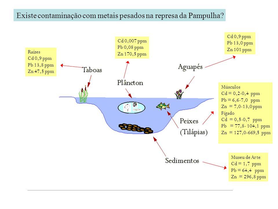 Existe contaminação com metais pesados na represa da Pampulha