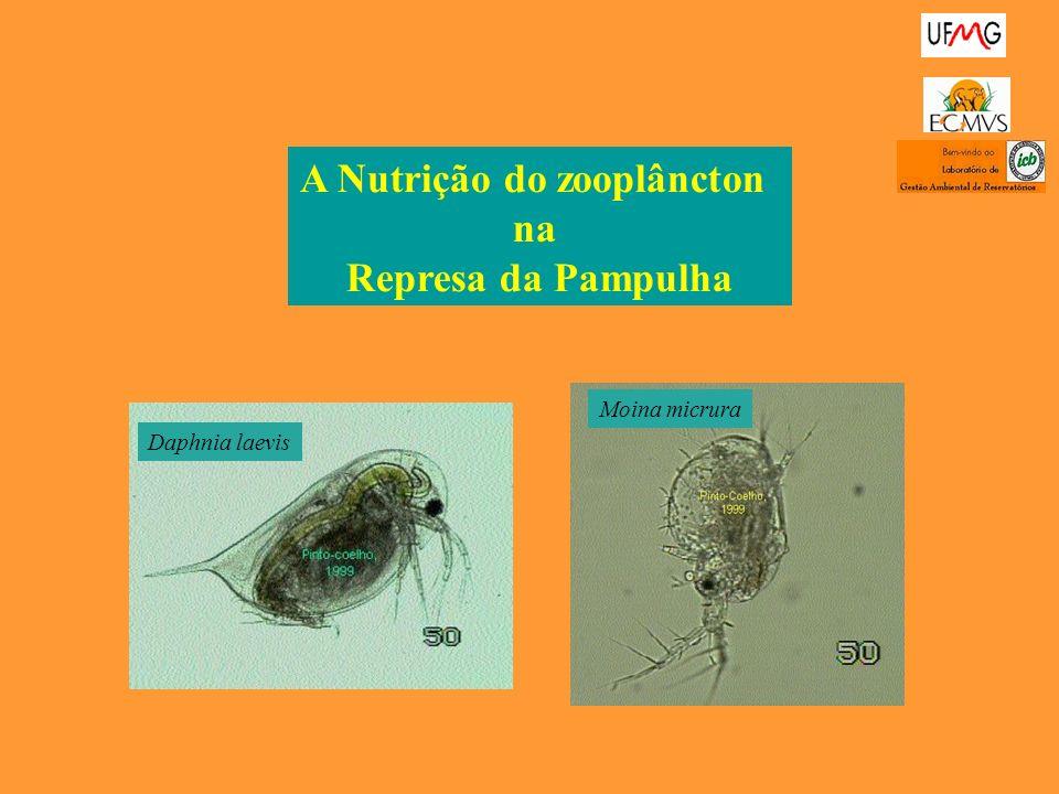 A Nutrição do zooplâncton