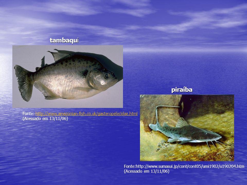 tambaqui piraíba. Fonte: http://www.amazonian-fish.co.uk/gasteropelecidae.html. (Acessado em 13/11/06)