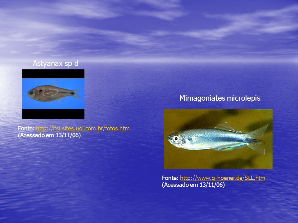 Mimagoniates microlepis