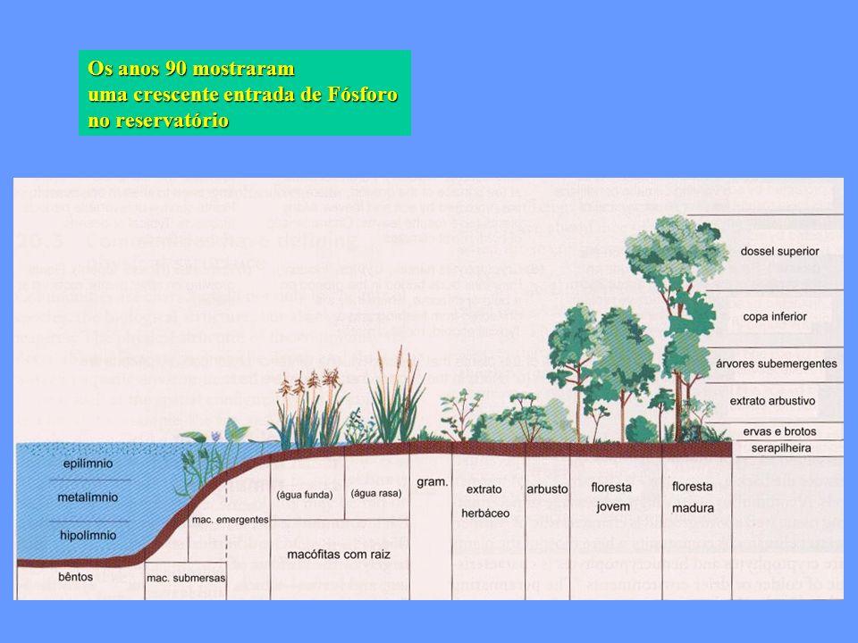 Os anos 90 mostraram uma crescente entrada de Fósforo no reservatório