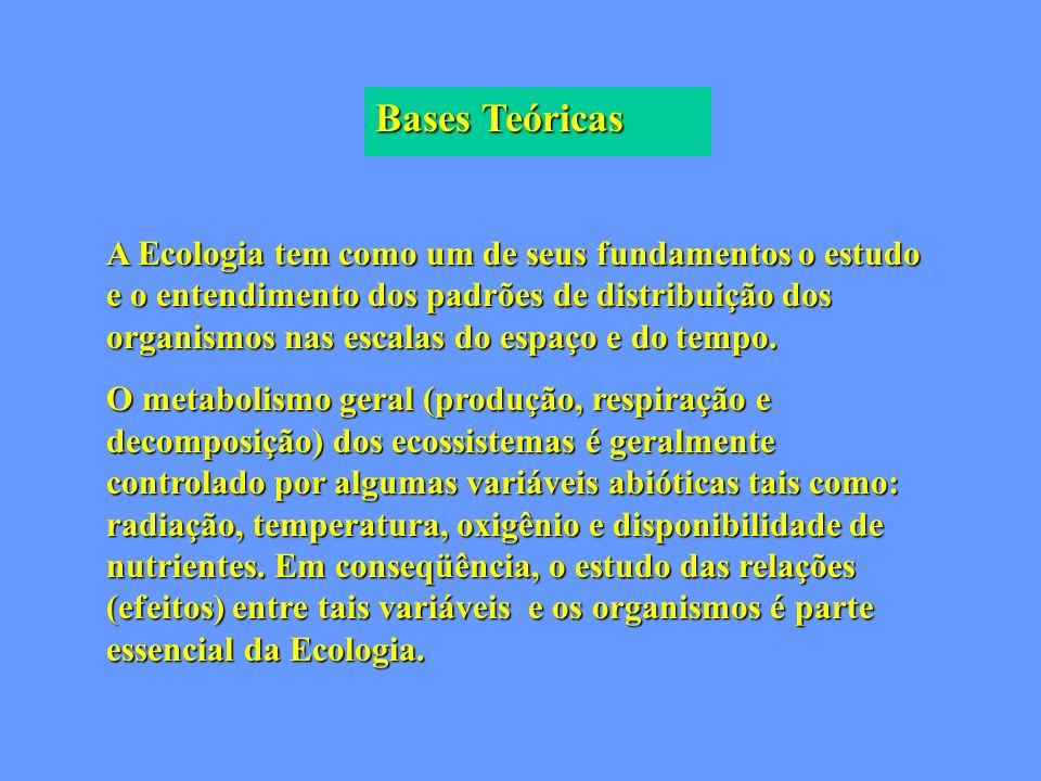 Bases Teóricas