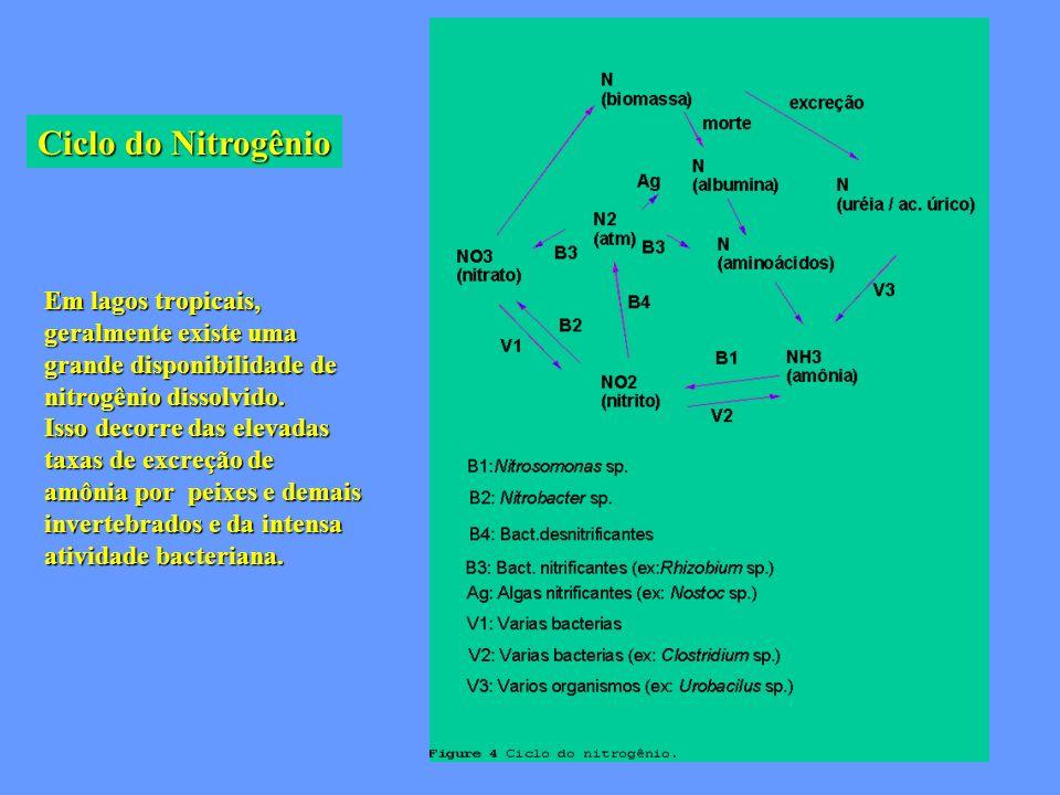 Ciclo do Nitrogênio Em lagos tropicais, geralmente existe uma