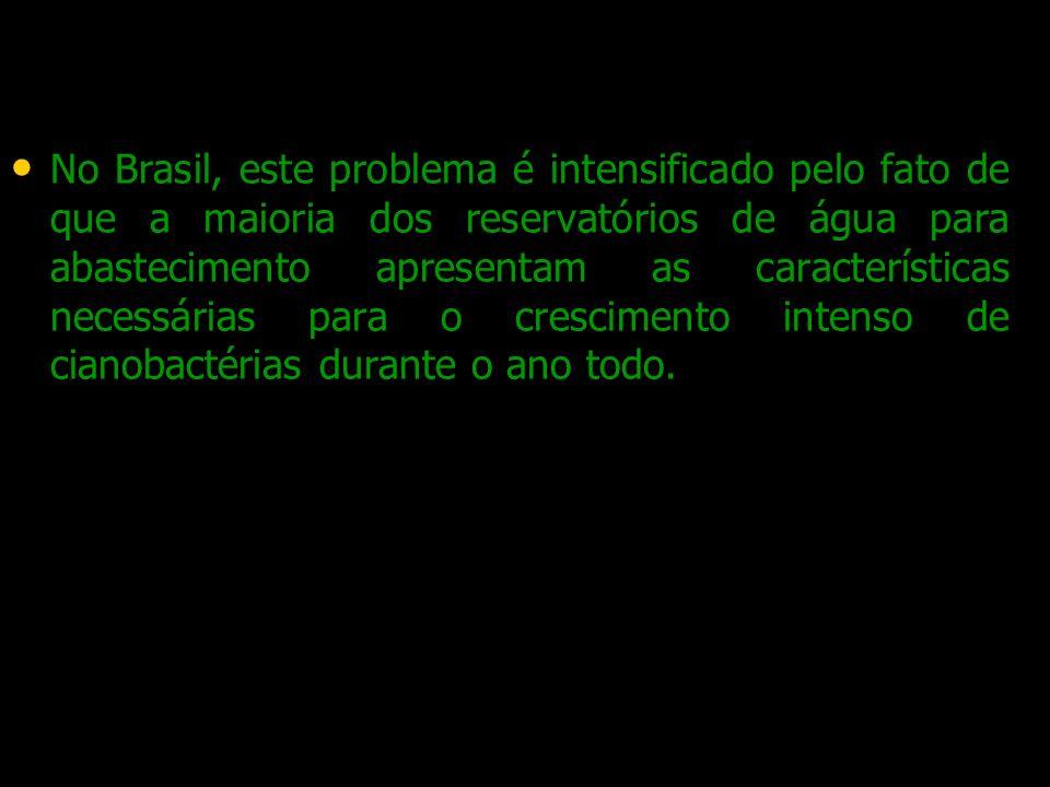 No Brasil, este problema é intensificado pelo fato de que a maioria dos reservatórios de água para abastecimento apresentam as características necessárias para o crescimento intenso de cianobactérias durante o ano todo.