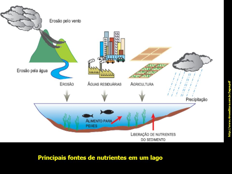 Principais fontes de nutrientes em um lago