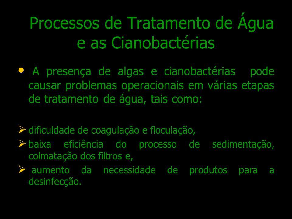 Processos de Tratamento de Água e as Cianobactérias